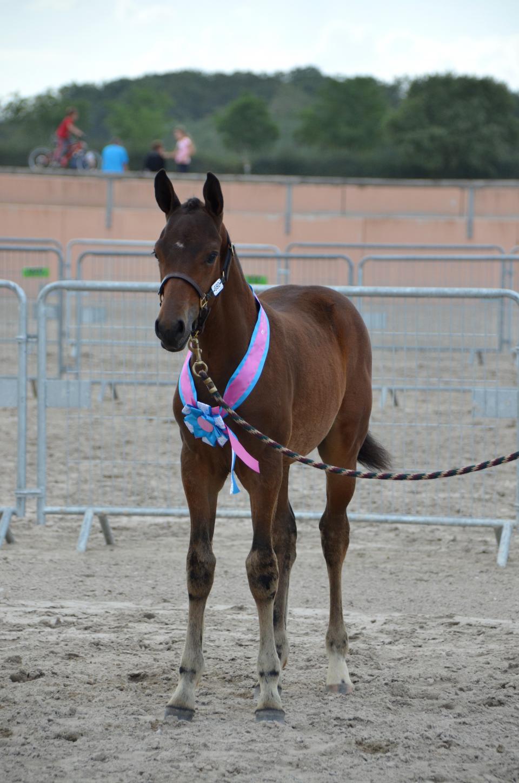Foal de Cobold Starr - Champion des Mâles